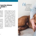 Est-il vrai que les chiens peuvent « sentir » le cancer ?